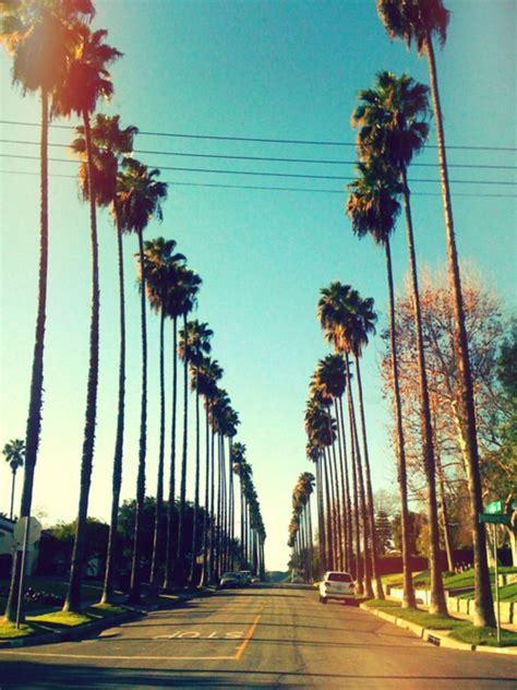 wallpaper california tumblr california palm trees tumblr background wallpaper