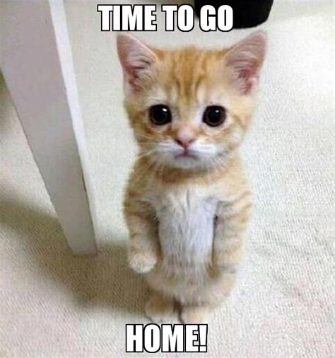 Time To Home by Time To Go Home Meme Kitten Timesheet 76510 Memeshappen