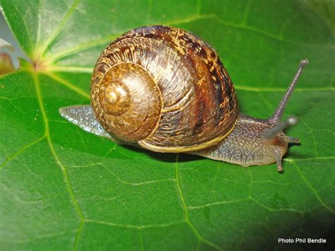 Snails In Garden t e r r a i n taranaki educational resource research