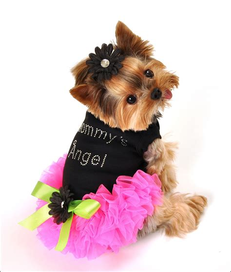 puppy dresses luxury pet boutique collars treats accessories the paw risian bistro
