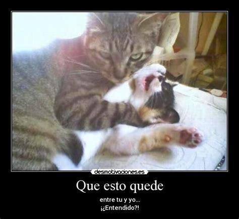 imagenes graciosas feministas para facebook las mejores im 225 genes graciosas de gatos para compartir