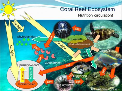 37 best images about kids coral reef diorama project on pinterest croissant sandwich science