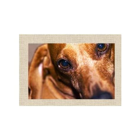 Template For Pet Sympathy Card by 5 Free Pet Sympathy Cards For Microsoft Publisher