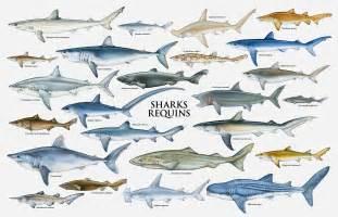 shark week shark identification diving underwater shark megamouth