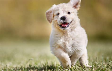 beautiful dog puppy  wallpaper hd wallpapers