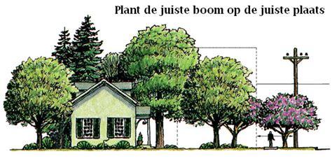 Welke Boom In De Tuin by Bomen Kiezen Welke Soorten Kleuren Passen In Mijn Tuin