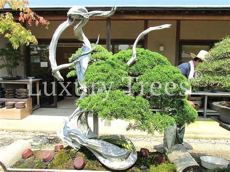 Pflege Bonsai 6380 by Juniperus Chinensis Meister Bonsai 187 Luxurytrees 174 Deutschland