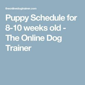 10 week puppy schedule puppy schedule for 8 10 weeks the trainer dogs puppies