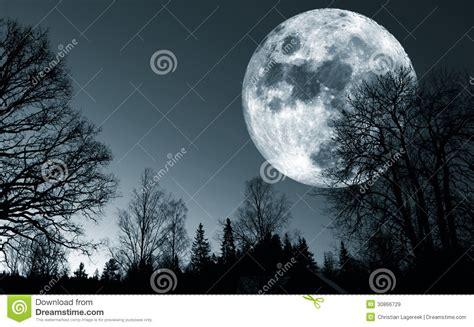 imagenes libres luna luna llena 225 rboles y bosque surrealistas im 225 genes de