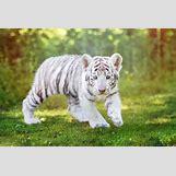 Lion Claw Marks   1280 x 855 jpeg 165kB