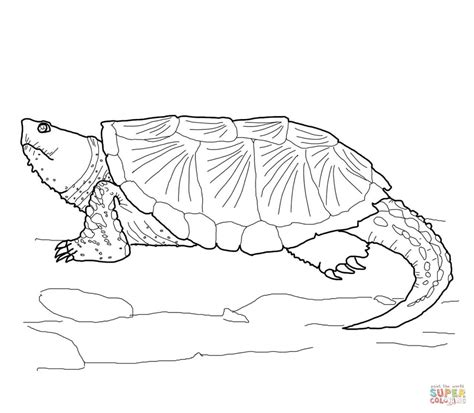 common snapping turtle coloring page free printable