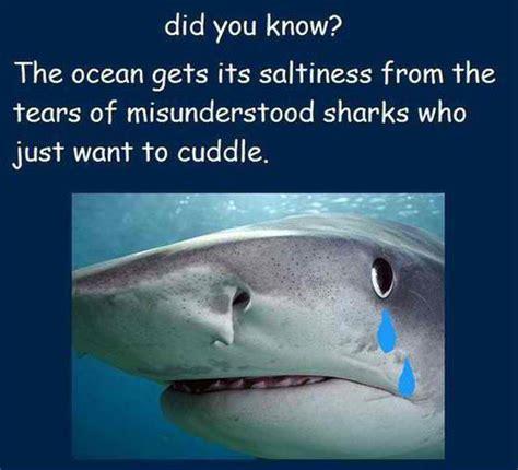 Shark Meme - sharks aren t bad they re just misunderstood 23 memes