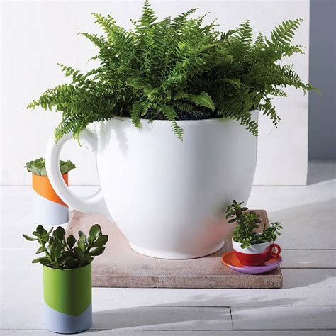Tea Cup Planter By The Form Emporium Notonthehighstreet Com Tea Cup Planter