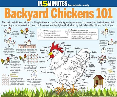 Backyard Chickens Chart Adelaide Chicken Sitting Service