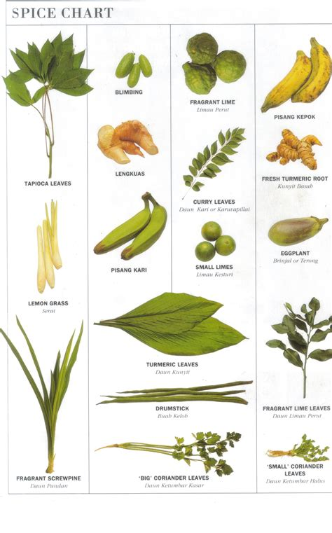 gambar daun bahan masakan my weblog