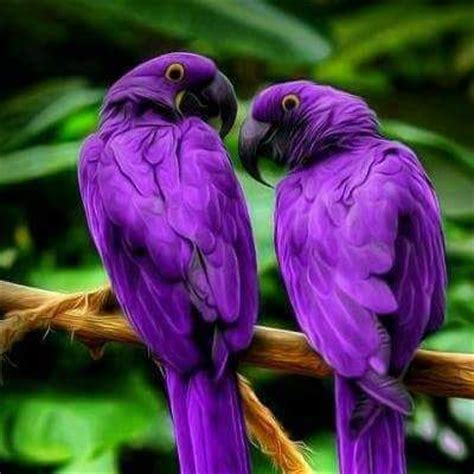 472 best images about purple animals creatures fairies