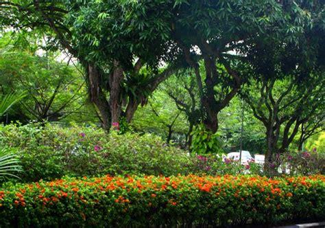 gardening for birds gardening for birds 1 the garden bird ecology study