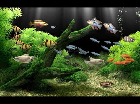 wallpaper animasi bergerak untuk windows xp descargar dream aquarium xp screensaver 1 0 gratis