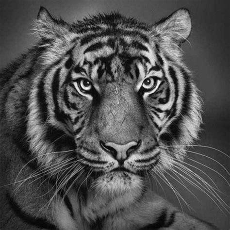 imagenes realistas de animales dibujos realistas de animales a lapiz imagui