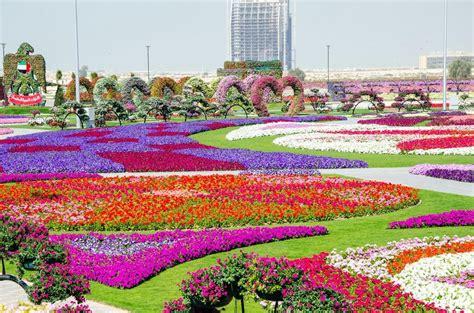 Wallpaper Wallpaper Dubai Miracle Garden Dubai Flower Garden