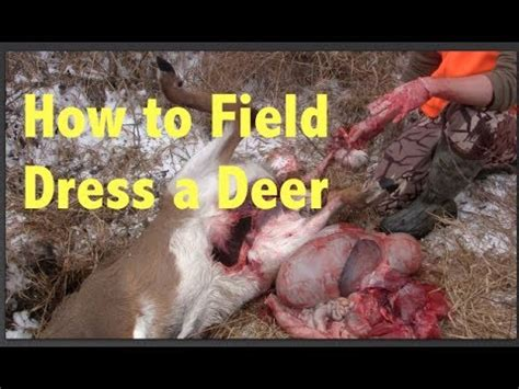 how to gut a buck how to field dress a whitetail deer step by step