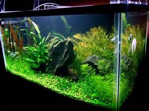 Aquascape Ideas Akuarium Air Tawar Willykelix
