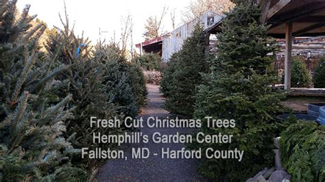 cut your own tree in carrol county md garden centers in maryland farms plant listings at farms garden centers garden