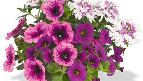 new annual flowers for your garden