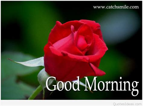 morning my images morning my sweet photo hd