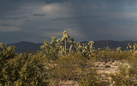 Landscape Kingman Az Can Birth Cull Arizona S Burro Population