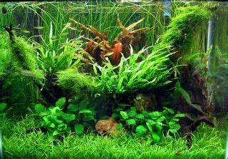 Do Ghost Shrimp Shed by Co2 Injection For Planted Aquariums Part 1 Captive