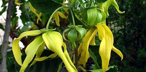 tanaman pekarangan  bisa membuat wanita cantik alami