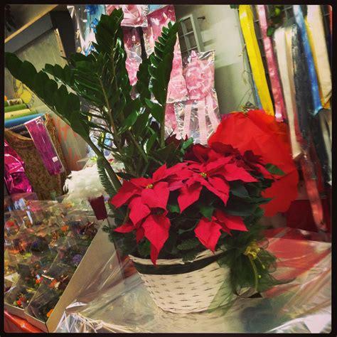 piante ricanti da vaso piante on line asclepias syriaca pianta dei pappagalli