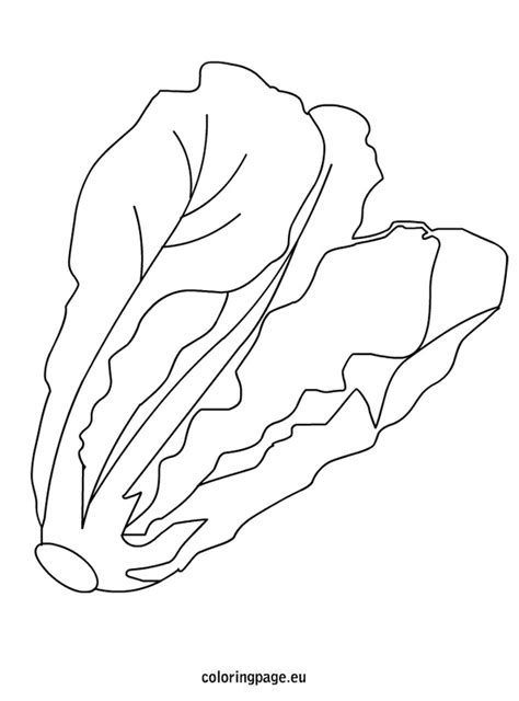 Lettuce Leaf Coloring Page | best photos of lettuce coloring pages lettuce coloring