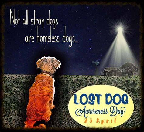 dogs day national lost awareness day lost dogs illinois