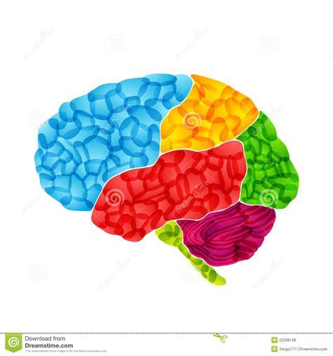 imagenes libres cerebro el cerebro humano vector el fondo abstracto fotos de