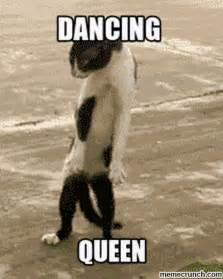 Dancing Cat Meme - dancing queen