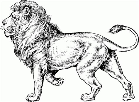 realistc cougar coloring pages printable realistc best 90 realistic lion coloring pages lion coloring