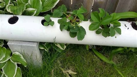 pvc pipe planter pvc pipe strawberry planter