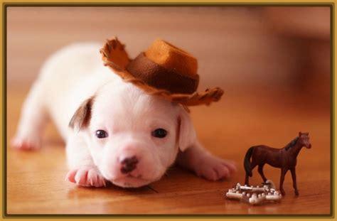 imagenes tiernas de perritos fotos de perritos cachorros tiernos archivos imagenes de