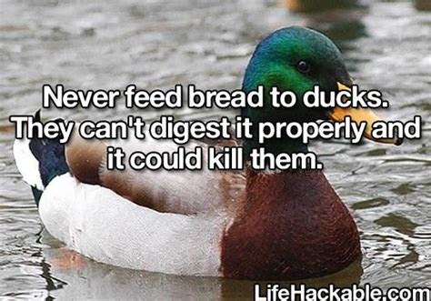 don t feed ducks bread things i like pinterest p 227 es
