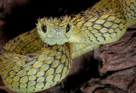 imagenes de serpientes oscuras el escolar serpientes vs v 237 boras