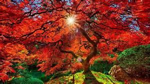 construction humaine japanese garden japon arbre automne