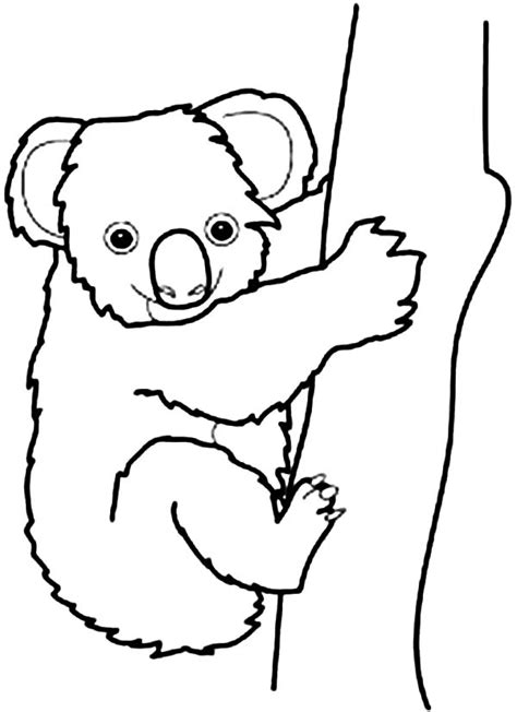 koala coloring pages easy koala coloring sheet coloring pages