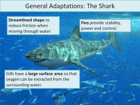 Marine Biology Powerpoint Adaptations Presentation And Information Hunt Ineedtoteachthat Free Marine Biology Powerpoint