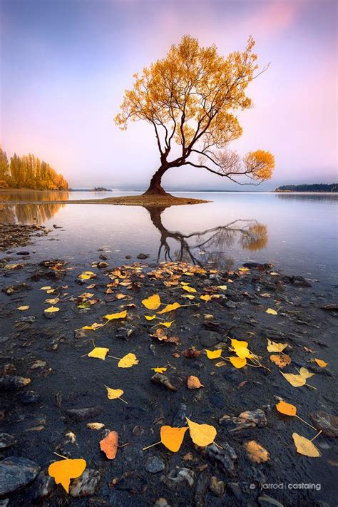 Best Landscape Photography New Zealand 25 Best Ideas About Wanaka New Zealand On New