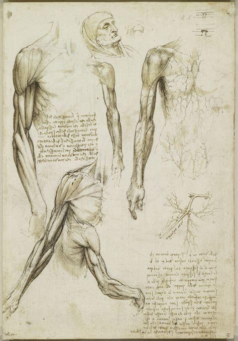 tavole anatomiche muscoli braccio vene braccio e tronco
