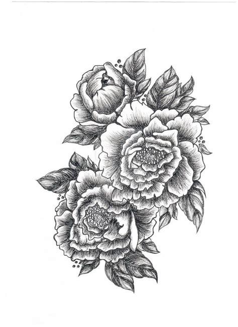 peony tattoo scientific peony illustration search