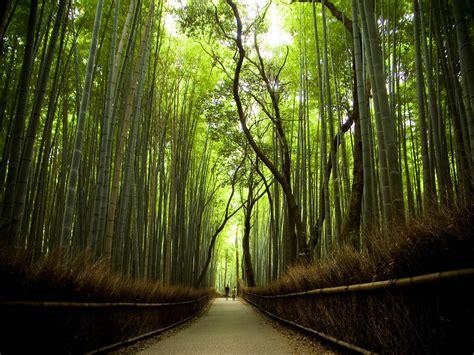 alam mengembang jadi guru jalan jalan setapak  indah