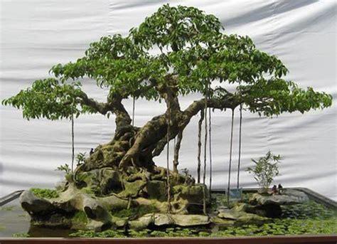 bonsai interno schede pratiche pagine verdi bonsai